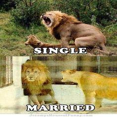 Married - Loony Humor Jokes, Funny Pics and Gifs. Happy Animals, Funny Animals, Cute Animals, Dog Memes, Funny Memes, Funny Cute, Hilarious, Funny Laugh, Single Life Humor