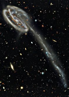 The Tadpole Galaxy (also known as UGC 10214 or Arp 188) is a disrupted barred spiral galaxy located about 420 million light-years away toward the northern constellation Draco. Its most dramatic features are an incredibly long trail of stars and massive, bright blue star clusters, reflecting the essence of our dynamic, restless and violent Universe. - Credit: NASA, Hubble, Mehdi Bozzo-Rey
