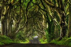 Tucked away in Northern Ireland, the Dark Hedges provided one of those breathless, perfect travel moments. It truly is a magical place.