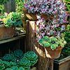 B-Echeveria imbricata C-Echeveria secunda Succulent Tree, Echeveria Imbricata, Plant Hooks, Succulents In Containers, Garden Images, Southwest Style, Drought Tolerant, Garden Planning, Container Gardening