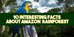The Amazon is synonymous with Central and South America – it's the largest of the rainforests, supporting a huge number of plants and animals and hugely important to our own survival. Taking up most of the Amazon Basin, the Amazon rainforest is mostly contained within Brazil, and stretches into Peru, Ecuador, Bolivia, and smaller parts of some other South American countries.