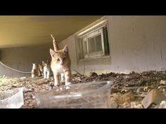 지하구멍에서 우다다 쏟아지는 새끼고양이 kitten show - 관찰남 - YouTube