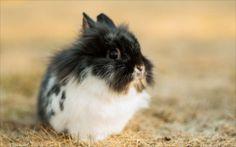 かわいいウサギ2