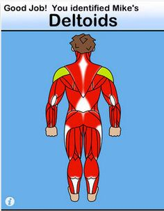 Muscle Scan Mike App ($0.99) https://itunes.apple.com/us/app/muscle-scan-mike/id403834890?mt=8