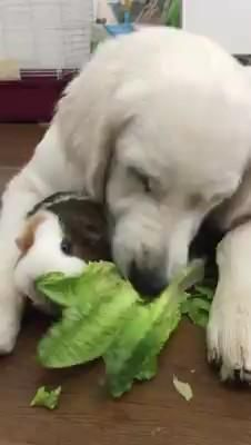 Cute Little Animals, Cute Funny Animals, Funny Dogs, Funny Horses, Cute Animal Videos, Funny Animal Pictures, Animal Antics, Cute Dogs And Puppies, Cool Pets