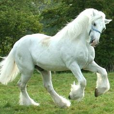 I have a grey Shire model horse that looks just like that one!! Her name is Siobhan.