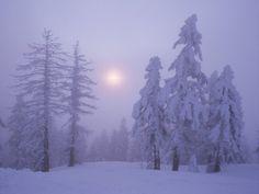 snow blanket trees