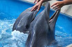 I love dolphins.