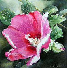 Pink Hybiscus, small flower watercolor painting 6x6 inch by Doris Joadorisjoa.com