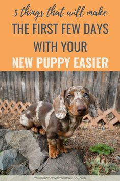 5 Things That Will Make The First Days With Your New Puppy Easier