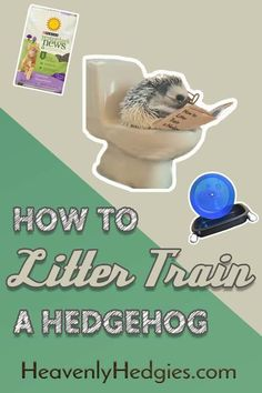 Is it possible to litter train your hedgehog? It is, and we will tell you exactly how to do that . Diy Hedgehog Toys, Hedgehog Treats, Hedgehog Pet Cage, Hedgehog Supplies, Hedgehog Care, Cute Hedgehog, Diy Litter Box, Baby Skunks, Pocket Pet