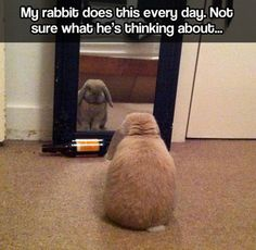 What is the meaning of being a bunny?My rabbit does this every day. Not sure what he's thinking about…