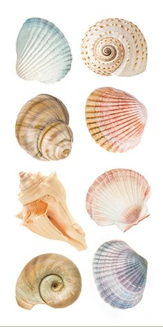 If you're a lover of the sea, you'll love getting creative with the Sea Shells StickyPix Stickers by Paper House Productions. Included in the package is one Shell Drawing, Watercolor Paintings, Art Paintings, Painted Shells, Seashell Art, Foto Art, Shell Crafts, Art Drawings, Artsy