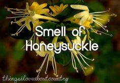 Things I Love About Country: smell of honeysuckle. by I LOVE the smell of honeysuckles.as kids we used to pick the deep yellow ones(the sweetest) and drink in that wonderful sweet juice in the long stem of the bloom. Southern Pride, Southern Sayings, Southern Comfort, Southern Belle, Southern Charm, Southern Girls, Country Life, Country Girls, Country Living