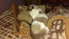 Belinha e Smith dormindo!