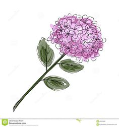 Sketch of hydrangea flower for your design