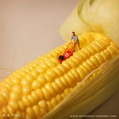 """Corn""  http://miniature-calendar.com/130606/"