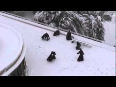 This Video Of Monks Having A Snowball Fight Will Warm Your Dark Soul