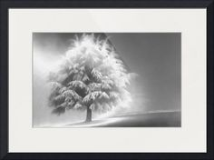 """""""Enlightened+Tree""""+by+Don+Schwartz,+Portland,+Oregon+//+A+snowy+tree+sits+on+a+hillside+radiating+light+in+the+foggy+morning.+It+was+the+first+snow+of+the+season+near+Portland,+Oregon.+Looks+great+printed+on+metallic+paper.+//+Imagekind.com+--+Buy+stunning+fine+art+prints,+framed+prints+and+canvas+prints+directly+from+independent+working+artists+and+photographers."""