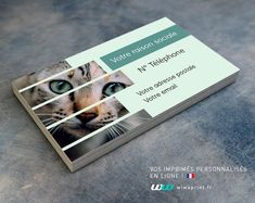 Carte De Visite Regard Chat Cartes Graphic Design Animaux Chiens