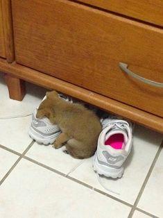 3 — Desmaiou com o cheiro  13 cachorrinhos que dormem em qualquer lugar — mas em qualquer lugar mesmo! - Mega Curioso