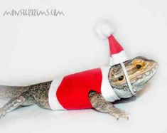 christmas costume Bearded dragon clothes by Monstertrims on Etsy Bearded Dragon Costumes, Animals For Kids, Cute Animals, Best Pets For Kids, Low Maintenance Pets, Cheap Pets, Like A Cat, Christmas Costumes