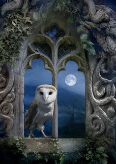 Evening Falls by Angie Latham - Owl Yi King, Owl Always Love You, Beautiful Owl, Wise Owl, Owl Art, Belle Photo, Moonlight, Fantasy Art, Fairy Tales