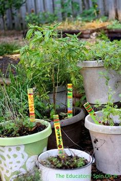 Creating an edible sensory garden for children with herbs.