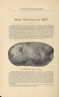 1877 - Illustrated and descriptive catalogue of potatoes for seed / - Biodiversity Heritage Library