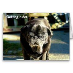 Funny Old Black Pug Birthday Card