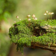 Floresta das fadas