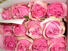Royal Fizz garden rose Garden Roses, Flowers, Plants, Food, Essen, Meals, Plant, Royal Icing Flowers, Flower
