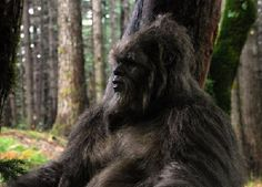 SPIKE TV to offer huge $10 Million prize for scientific evidence of bigfoot.  They are currently holding casting calls for adventurous competitors to star in new show that begins in Jan 2014.