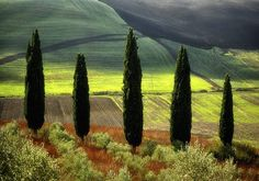 Tuscany, like living in a postcard www.cookintuscany.com #italy #culinary #cooking #school #cookintuscany #italyiloveyou #allinclusive #montepulciano #cookintuscany #italy #culinary #montefollonico #tuscany #school #class #schools #classes #cookery #cucina #travel #tour #trip #vacation #pienza #montepulciano #florence #siena #cook #cortona #pienza #pasta #montefollonico #iloveitaly #underthetuscansun #wine #vineyard #pool #church #domo #gelato #dog #vino