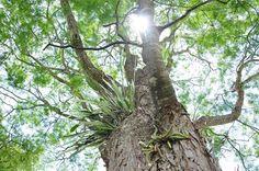 Cansada sentei embaixo de uma árvore em Inhotim na minha última visita. Quando olhei pra cima me deparei com esse espetáculo da natureza.  Foto sem filtro algum! #SVemInhotim #turismoMG #Inhotim #segredosdeviagem #brasil #viajepelobrasil #mtur #MinasGerais #Brumadinho #nature #blessed #natureza