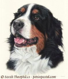 Oil Pastel Dog | Trapper - Bernese Mountain Dog Paintings & Portraits