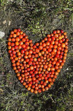 Rowan Berries land art