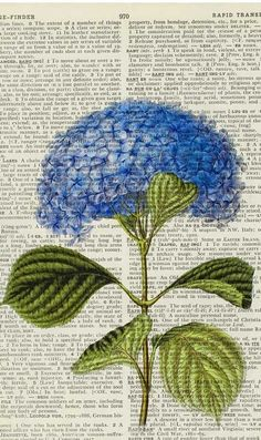 Vintage hydrangea artwork - printed on page from old dictionary