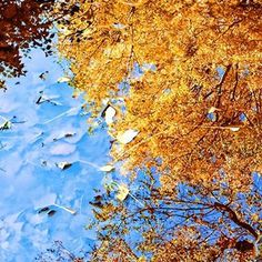 Not a bad sight for a leafy puddle