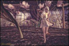 Fairy-Pirate-1