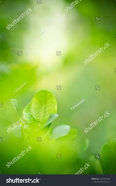 Closeup Nature View Green Leaf On ภาพสต็อก (แก้ไขตอนนี้) 1487351396 Green Leaf Background, Nature View, Green Leaves, Close Up, Stock Photos