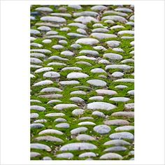 I love cobbles. Reminds me of my youth. Plays havoc if you're wearing heels! cobble paving with moss