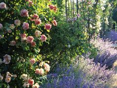 New this year is the scented garden, dominated by lavender and roses