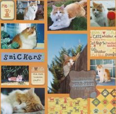 cat scrapbooking ideas | Layout: cat pages with various size photos