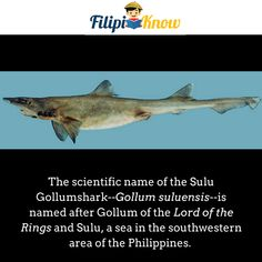 Sulu Gollumshark or Gollum suluensis A Sea, Tagalog, Pinoy, Trivia, Languages, Geography, Philippines, Facts, History
