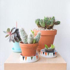 Un coin de verdure chez soi, cactus, deco via @mcmaison