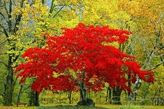 BRIGHT RED Nature and wildlife photography Photographic art
