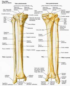 La gamba - Massoterapia Salvatore Bognanni