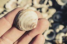 Tasmania exploring man examining the details on a shell found at Shelly Point Beach, Scamander, Australia by Ryan Jorgensen
