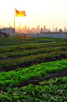 Brooklyn Grange in New York is a grass roots organic produce farm for many area restaurants! May be the largest roof top farm in the world. (Not sure?) In any event, we LOVE the idea and concept here. Bring it on throughout the world please as all local restaurants should be doing much more of this! (Perhaps we could get McDonalds, Chick-fil-A, Wendys or Burger King to start growing at least their lettuce, tomatoes and onions on theirs!! Tell them!!!)